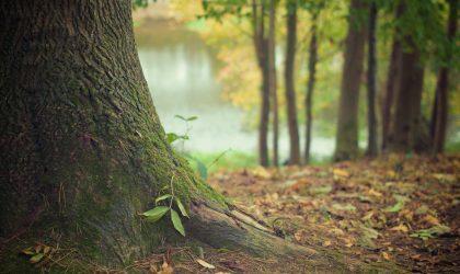 Dia Mundial da Árvore | Floresta – 21 de março