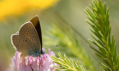Dia Internacional da Biodiversidade – 22 de maio