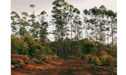 """Desflorestação e destruição das florestas: redução do impacto dos produtos vendidos na UE"""""""