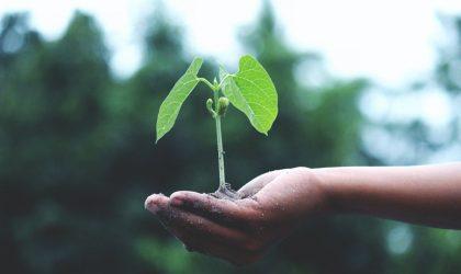 """Webinar sobre """"Boas Práticas de Educação Ambiental"""""""