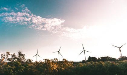 Monitorizações de Sistemas Ecológicos – Sobreequipamento do Parque Eólico de Testos